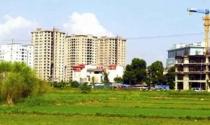 Hà Nội: Quyết liệt triển khai việc giao đất dịch vụ