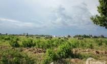"""Phía sau cơn sốt đất là những dự án """"xanh cỏ, no bò"""""""