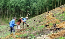Tuyên Quang: Quản lý, sử dụng đất lâm nghiệp còn nhiều sai phạm