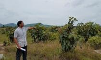 Dự án hồ chứa nước Krông Pắc thượng (Đắk Lắk): Dân tố giác đền bù đất lấn chiếm trái phép