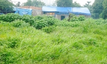 Bất động sản 24h: Dự án sai phạm, chưa đền bù đã ngang nhiên rao bán