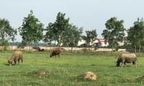 Hàng trăm dự án bỏ hoang ở Hà Nội: Khe hở thẩm định dự án