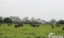 Thị trường đất nền: giao dịch giảm, giá không giảm