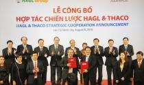 Thaco sẽ rót hàng chục nghìn tỷ vào HAGL