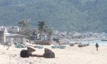 """Khánh Hòa: Dự án """"xí"""" đất bãi biển, gần 30 năm không bị thu hồi"""