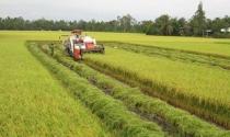 """Chuyển nhượng đất nông nghiệp: Chủ yếu vẫn là giao dịch """"ngầm"""""""