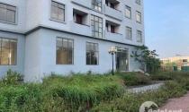 Hà Nội: Xót của nhìn hàng trăm căn hộ tái định cư xây đẹp rồi để hoang phế
