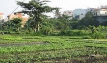 Nhiều hộ dân vườn rau phường 6, Tân Bình đã nhận tiền hỗ trợ