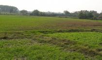 Kiểm tra việc cấp GCN quyền sử dụng đất ở cho đất nông nghiệp tại Hà Đông