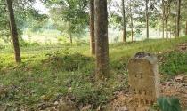 Dân trồng rừng thì bị nhổ, giám đốc chiếm đất rừng được đền tiền tỉ?