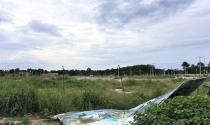 Dự án dân cư trên đất vàng để trâu bò… gặm cỏ
