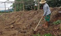 Đà Nẵng: Hơn 600 ha đất nông nghiệp bị 'bức tử'