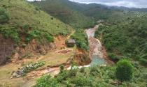 Quảng Ninh: Ồ ạt đốn rừng trồng nhãn để trục lợi hàng chục tỉ bồi thường