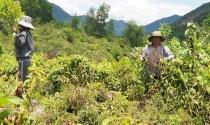 """Đà Nẵng: Địa phương giao """"nhầm"""" đất rừng, dân chịu khổ"""