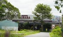 Phó Thủ tướng yêu cầu Bộ Công an làm rõ thông tin về Alibaba