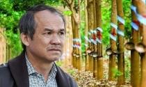 Thaco sở hữu hơn 26% vốn tại HAGL Agrico của Bầu Đức