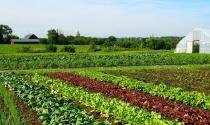 Vừa đầu tư nghỉ dưỡng vừa kiếm tiền từ farmstay G7