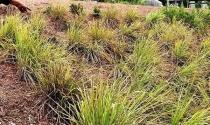 Thừa Thiên Huế: Người dân Huế bức xúc vì giá bồi thường 1m2 đất không mua nổi tô bún