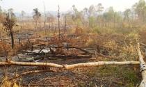 Gia Lai: Nhiều lãnh đạo huyện cấp sổ đỏ trên đất lâm nghiệp