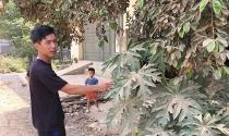 """Yên Định (Thanh Hóa): Người dân """"hít bụi, ăn đất"""" từ công trình san lấp mặt bằng"""