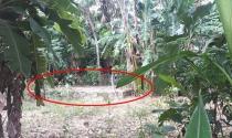 Bi hài đất cấp 40 năm vẫn không thể làm được sổ đỏ vì cho xã mượn tại Hà Tĩnh