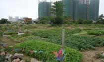 Đất nông nghiệp kết hợp nhà ở kinh tế vườn