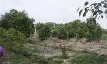 Đất trồng cây lâu năm, hết hạn sử dụng có bị thu hồi?