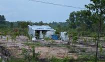 Xây dựng nhà ở trên đất trồng cây lâu năm?