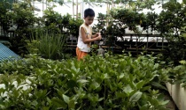 Rau xanh sân vườn