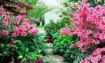 Bí quyết tạo vẻ đẹp ấn tượng cho vườn nhà