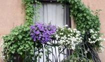 Ban công nở đầy hoa