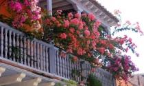 Chọn cây cảnh đặt ở ban công giúp bảo vệ nhà bạn