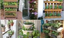 Ý tưởng thiết kế vườn thẳng đứng