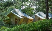 Những khối nhà gỗ ẩn mình giữa thung lũng Đà Lạt hút hồn báo Mỹ