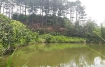 Bán đất và nhà khuôn viên rộng xã N Thôn Hạ, huyện Đức Trọng