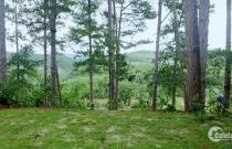 Bán nhà và đất khuôn viên rộng,vị trí đẹp huyện Đức Trọng tỉnh Lâm Đồng.