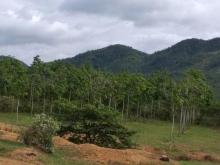 Bán gấp 50ha đất nông nghiệp Thôn Tân Phú, Xã Ninh Gia, Đức Trọng, 60 tỷ. LH 0937311081