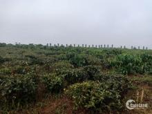 Đất sổ đỏ, sang tên nhanh tại thành phố Bảo Lộc, Lâm Đồng, giá cực rẻ
