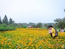 Dự án vàng trong khu đất vàng tại khu sinh thái cao cấp Đan Phượng( The Phoenix Garden)