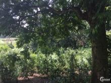 Cần bán gấp lô đất tại Lương Sơn, Hòa Bình, với giá 720 nghìn/m2