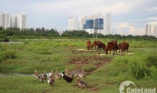 Phước Kiển: Dự án nghìn tỷ để chăn vịt, thả bò