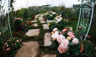"""Có gì bên trong """"vườn hồng"""" bên Vịnh Hạ Long?"""