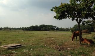Làm gì khi mua đất nhưng thuộc diện quy hoạch?