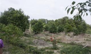 Chuyển mục đích sử dụng đất trồng cây lâu năm sang đất ở