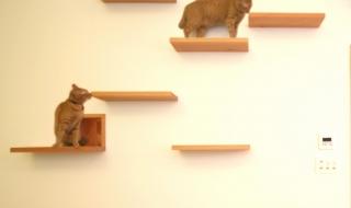 Thiết kế nhà có sân chơi cho mèo cưng