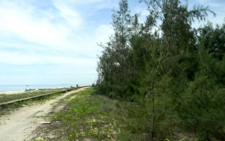 Đất ven biển Tam Thanh: Sốt thật hay sốt ảo?