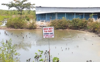 Bất động sản TP.HCM: Cảnh giác với sốt đất ở Cần Giờ