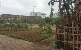 Thái Bình: Lập dự án xây trường rồi bỏ đất trống
