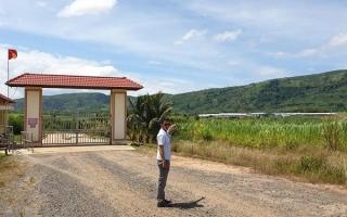 Đắk Lắk: Nhiều sai phạm tại dự án nghìn hecta, vạn con bò