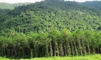 Hỏi về thời hạn sử dụng và giải quyết tranh chấp đất có bìa xanh